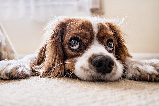Hoe kun je een einde maken aan een slechte adem bij je hond?